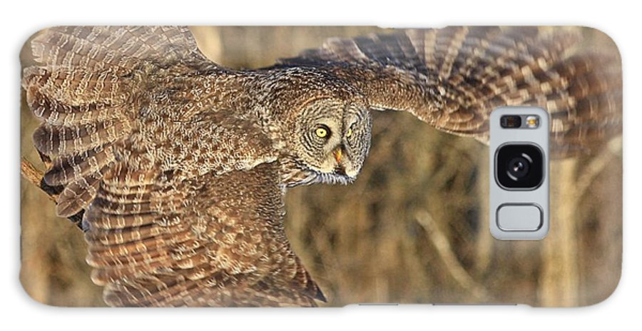 Great Grey Owl Galaxy S8 Case featuring the photograph Captain Great Grey To The Rescue by Heather King