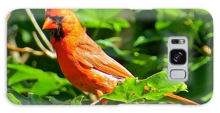 Cardinal Galaxy S8 Case featuring the photograph Cardinal 119 by Patsy Pratt