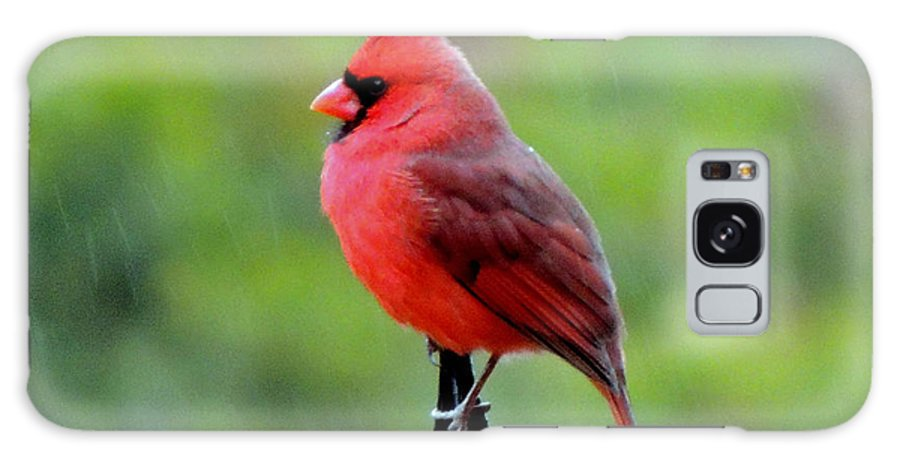 Male Cardinal Galaxy S8 Case featuring the photograph Cardinal In The Rain by Mary Williamson