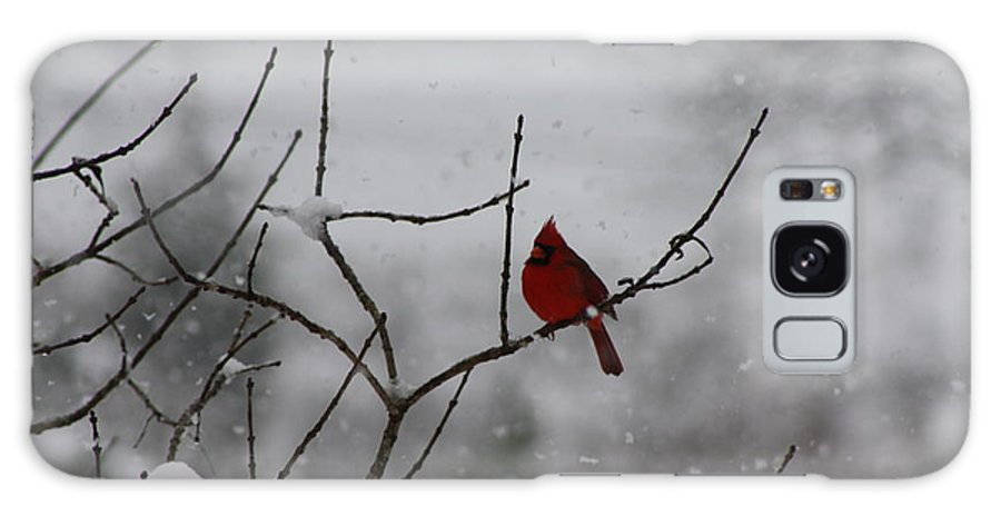 Bird Galaxy S8 Case featuring the photograph Cardinal In The Snow by Tia Patton