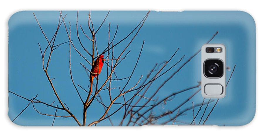 Beak Galaxy S8 Case featuring the photograph Cardinal Morning by Gaurav Singh