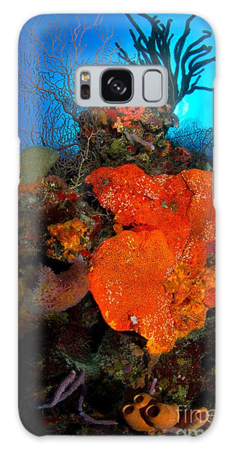 Orange Elephant Ear Sponge Galaxy S8 Case featuring the photograph Caribbean Color by Aaron Whittemore