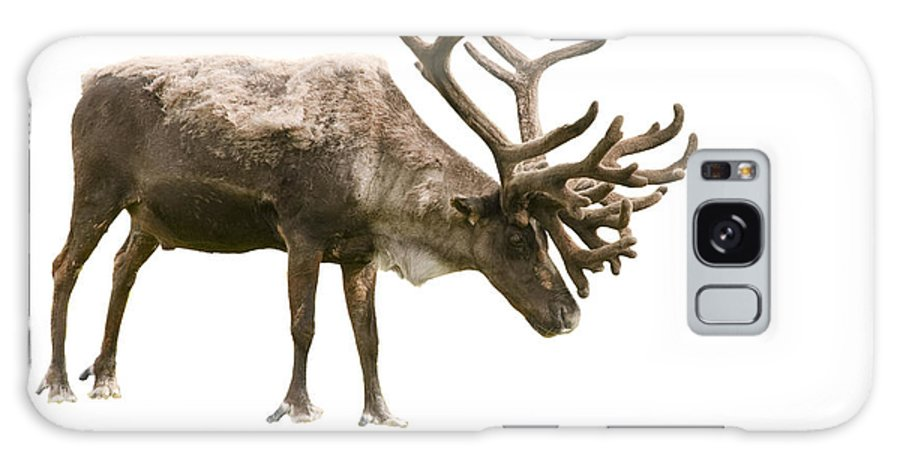 Adult Galaxy S8 Case featuring the photograph Caribou by Jeffrey Banke