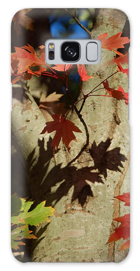 Autumn Galaxy S8 Case featuring the photograph Carolina Autumn by Suzanne Gaff