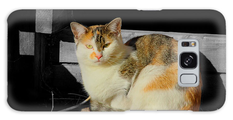 Cat Galaxy S8 Case featuring the photograph cat by MisKamiah Photography