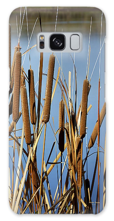 Cat Nine Tails Galaxy S8 Case featuring the photograph Cat Nine Tails by Phyllis Denton