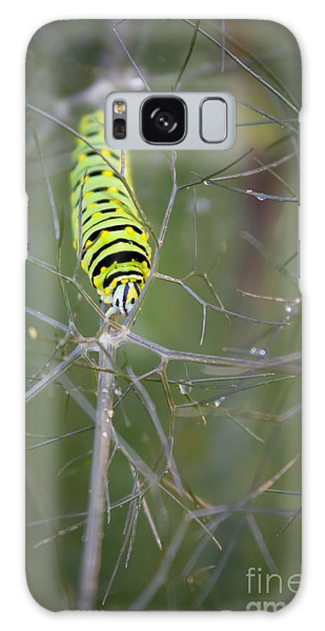 Caterpillar Galaxy S8 Case featuring the photograph Caterpillar On Fennel In The Morning Dew by Jennifer Rice