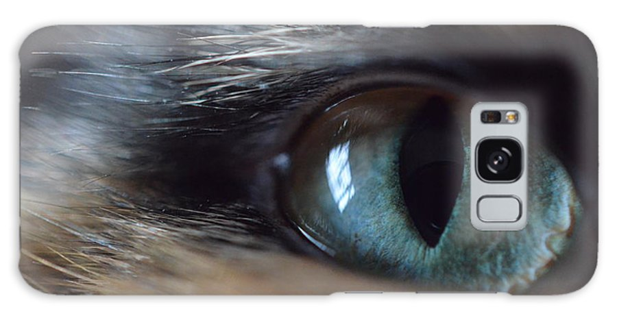 Cat Galaxy S8 Case featuring the photograph Cat's Eye by Meghan Cahilly