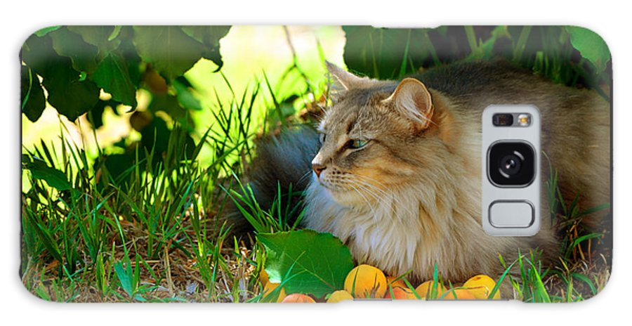 Cat At Rest Galaxy S8 Case featuring the photograph Cat's Mountain Summer by Susanne Still