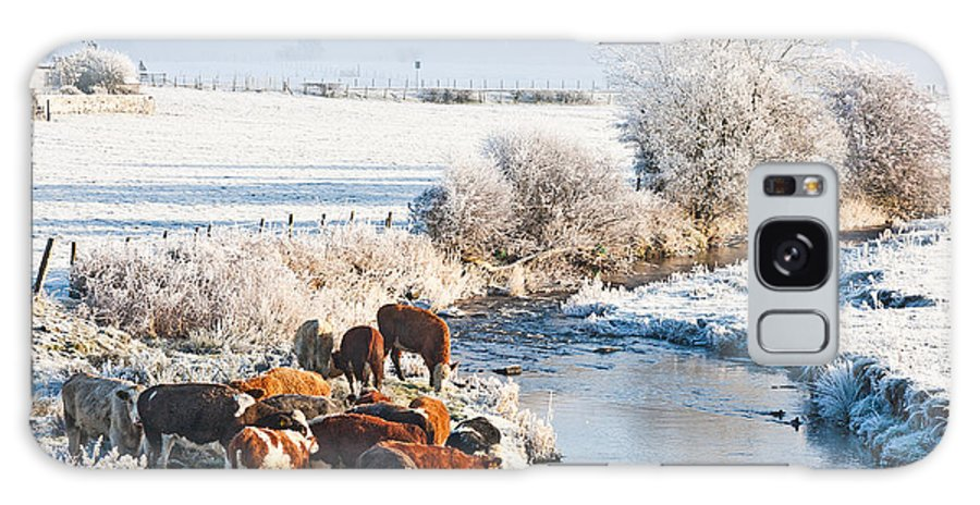 Winter Galaxy S8 Case featuring the photograph Cattle In Winter by Liz Leyden