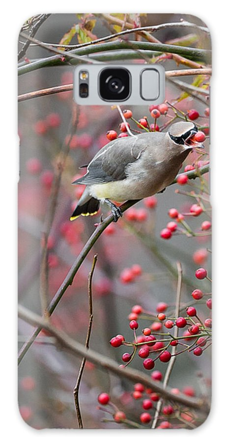 Autumn Galaxy S8 Case featuring the photograph Cedar Waxwing Feeding by Bill Wakeley