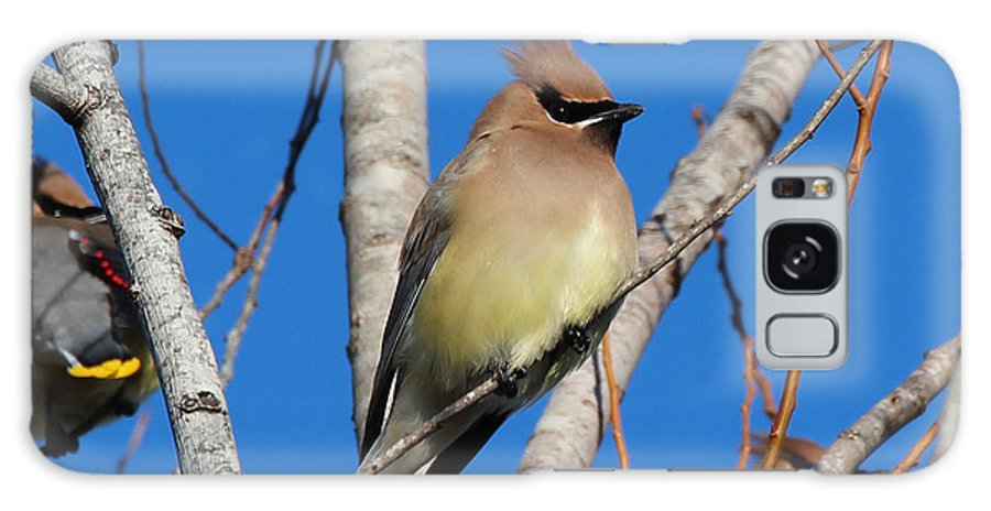 Galaxy S8 Case featuring the photograph Cedar Waxwings by Bob Camp