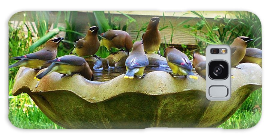 Cedar Waxwing Galaxy S8 Case featuring the photograph Cedar Waxwings by Stacey Pollio
