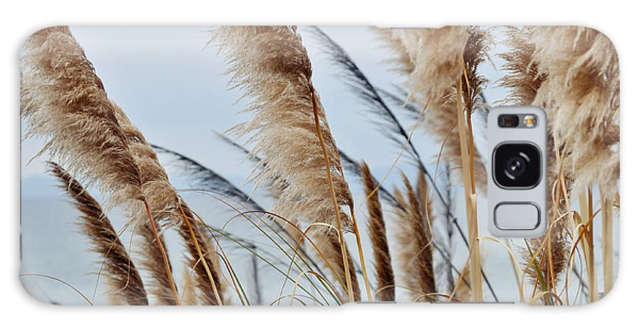 Pampas Grass Galaxy S8 Case featuring the photograph Central Coast Pampas Grass II by Kyle Hanson