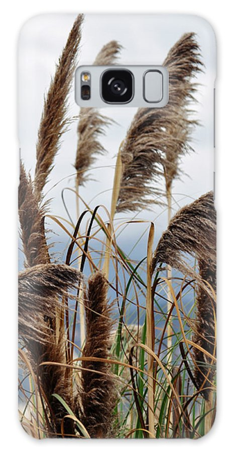Pampas Grass Galaxy S8 Case featuring the photograph Central Coast Pampas Grass by Kyle Hanson