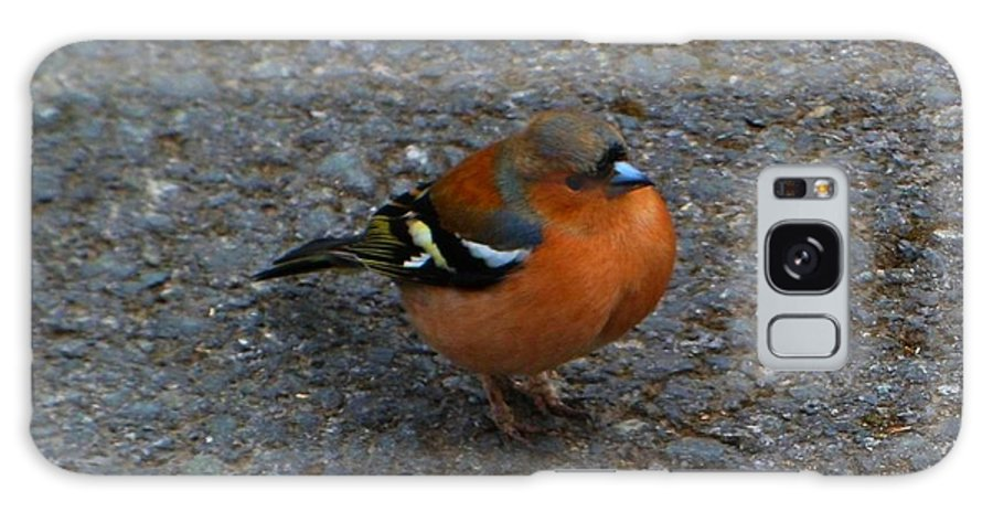 Bird. Chaffinch. Galaxy S8 Case featuring the photograph Chaffinch by Beth Grant