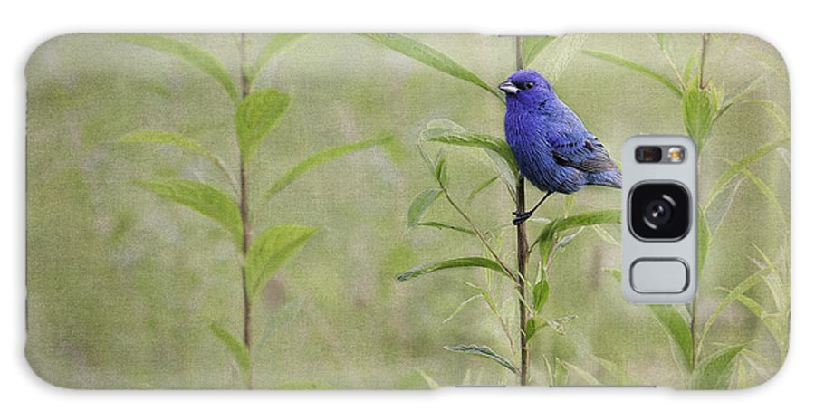 Indigo Bunting Galaxy S8 Case featuring the photograph Charming Curiosity by Dale Kincaid