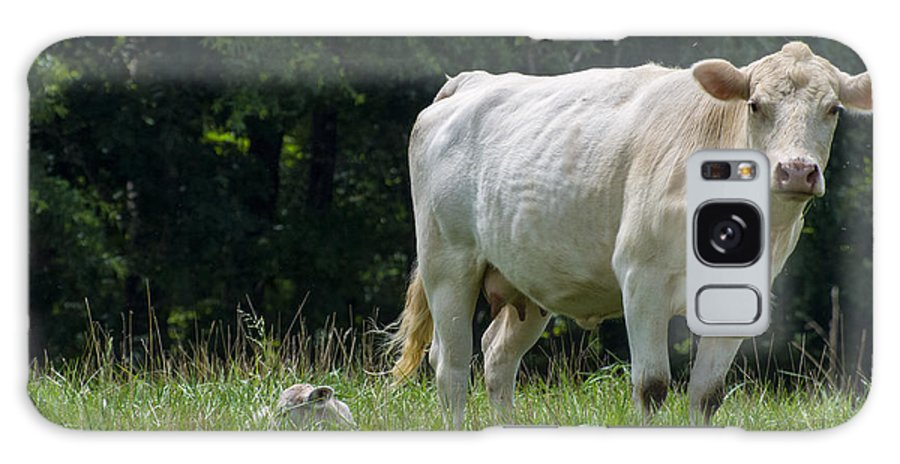 Cows Galaxy S8 Case featuring the digital art Charolais Cow And Calf In Field by Chris Flees