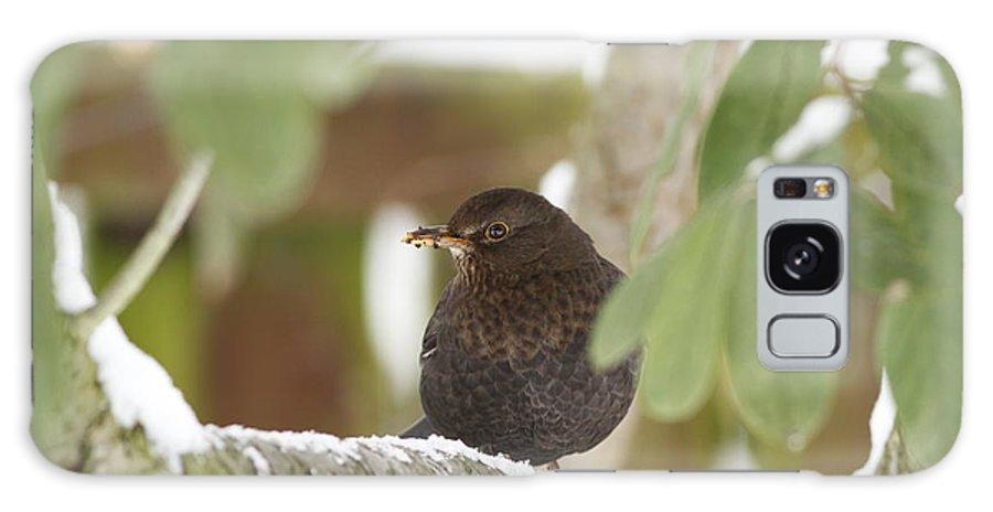 Blackbird Galaxy S8 Case featuring the photograph Cheeky Blackbird by Simon Gregory