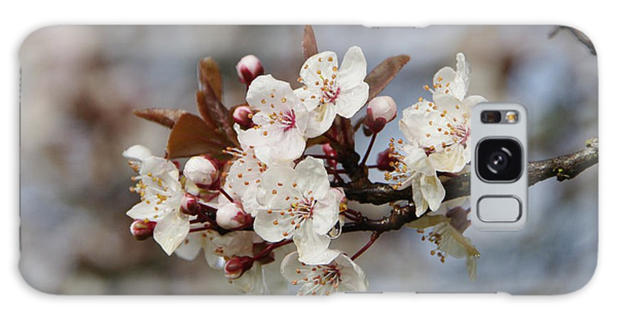 Cherry Blossoms Galaxy S8 Case featuring the photograph Cheerful Cherry Blossoms by Marilyn Wilson