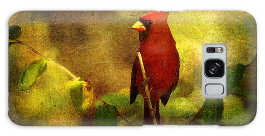 Cardinal Galaxy S8 Case featuring the digital art Cheery Red Cardinal by Lianne Schneider