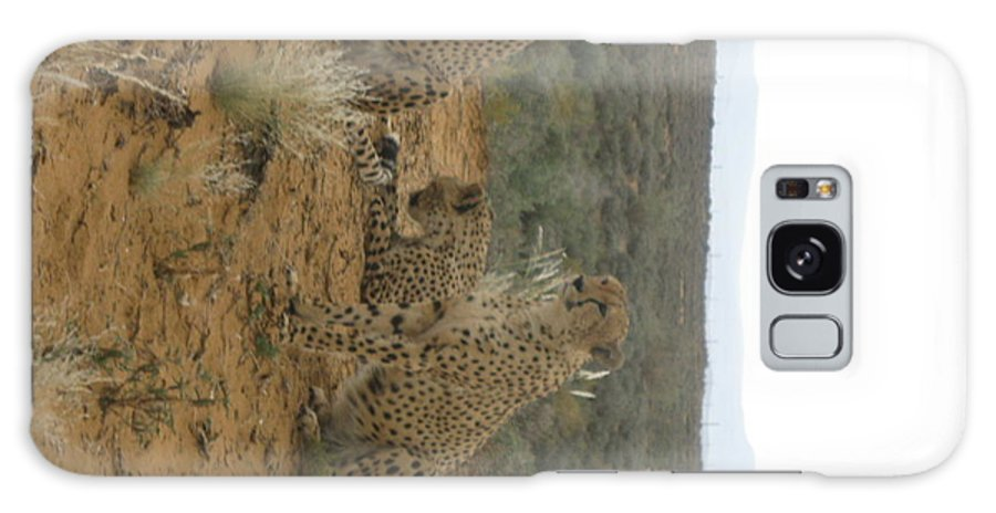 Leopard Galaxy S8 Case featuring the photograph Cheetah Chatter by Faisal Amjad