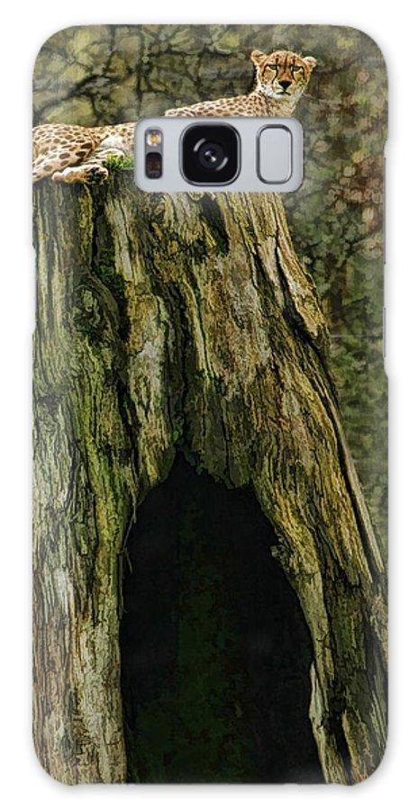 Cheetah Galaxy S8 Case featuring the photograph Cheetah Tree Perch by Blake Richards