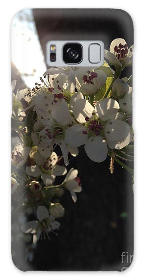 Cherry Blossom Galaxy S8 Case featuring the photograph Cherry Blossom by Rachel Freeman