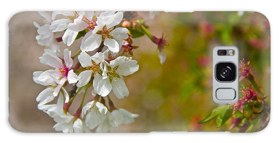 Cherry Galaxy S8 Case featuring the photograph Cherry Blossoms Galore by Alice Gipson