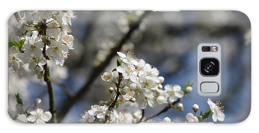 Cherry Blossoms Galaxy S8 Case featuring the photograph Cherry Blossoms by Robert Kimble