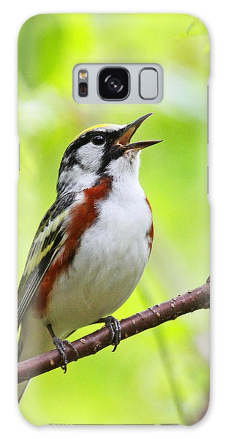 Chestnut-sided Warbler Galaxy S8 Case featuring the photograph Chestnut-sided Warbler by Jaron Wood