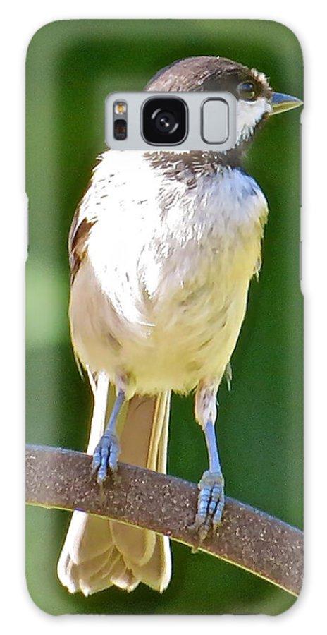 Chickadee Galaxy S8 Case featuring the photograph Chickadee 101 by Patsy Pratt
