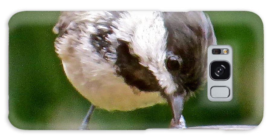 Chickadee Galaxy S8 Case featuring the photograph Chickadee 103 by Patsy Pratt