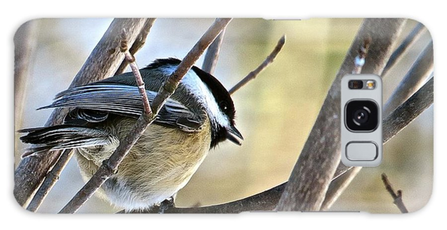 Chickadee Galaxy S8 Case featuring the photograph Chickadee 115 by Patsy Pratt