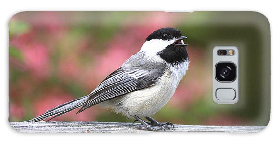 Bird Galaxy S8 Case featuring the photograph Chickadee Song by Deborah Benoit