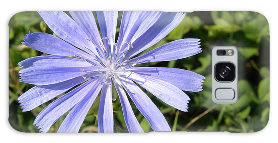 Chicory Galaxy S8 Case featuring the photograph Chicory by Laura Yamada