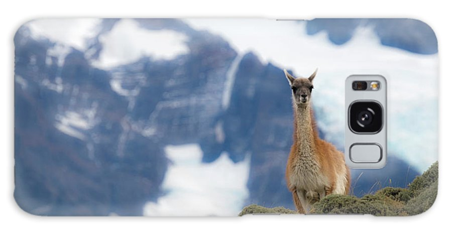 Chile Galaxy S8 Case featuring the photograph Chile, Guanaco by George Theodore