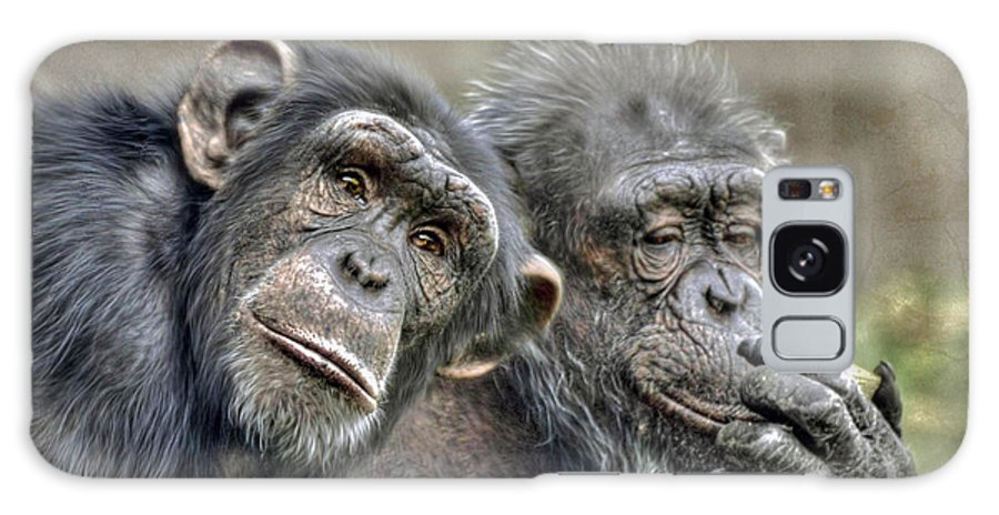 Couple Galaxy S8 Case featuring the photograph Chimp Couple by Savannah Gibbs