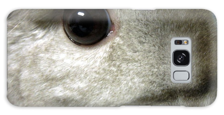 Funky Galaxy S8 Case featuring the photograph Chinchilla Face by Renee Trenholm
