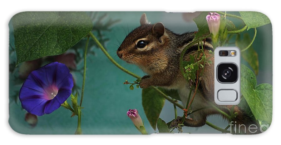 Chipmunk Galaxy S8 Case featuring the photograph Chipmunk In The Morning Glory Vine by Marjorie Imbeau