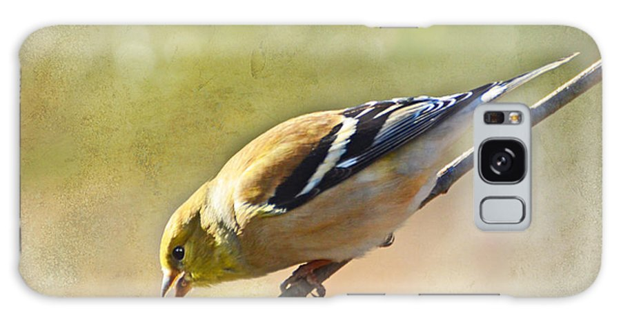 Bird Galaxy S8 Case featuring the photograph Chirping Gold Finch by Debbie Portwood
