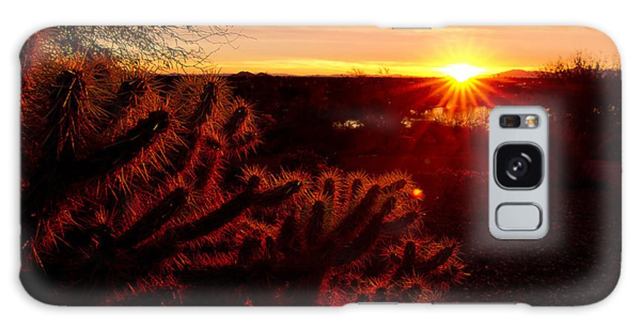 Cholla Galaxy S8 Case featuring the photograph Cholla On Fire by Kelly Gibson
