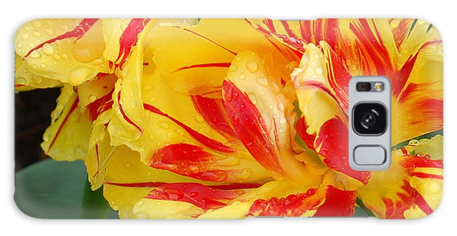 Red And Yellow Tulip Galaxy S8 Case featuring the photograph Cinco De Mayo by Suzanne Gaff