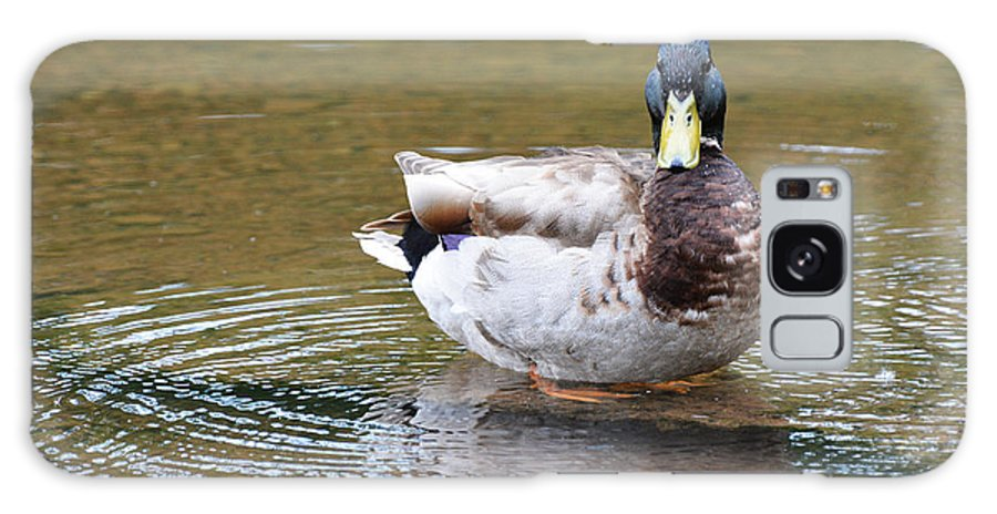 Mallard Galaxy S8 Case featuring the photograph Circle Of Life by Cindy Manero