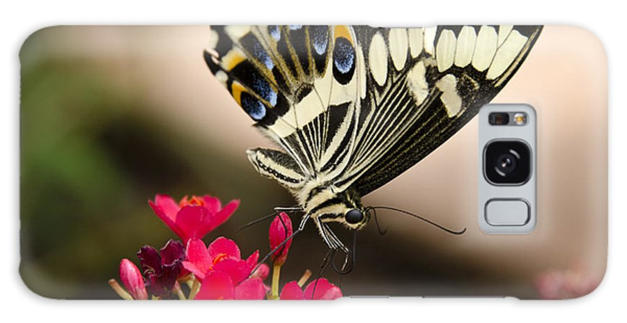 Black And White Butterfly Galaxy S8 Case featuring the photograph Citrus Swallowtail by Saija Lehtonen
