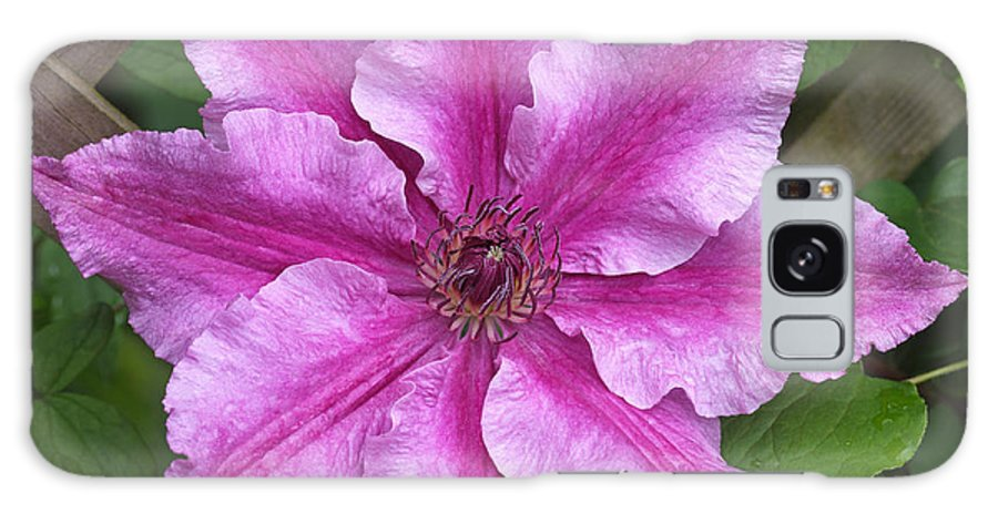 Clematis Galaxy S8 Case featuring the photograph Clematis Ooh La La by Rosemary Calvert