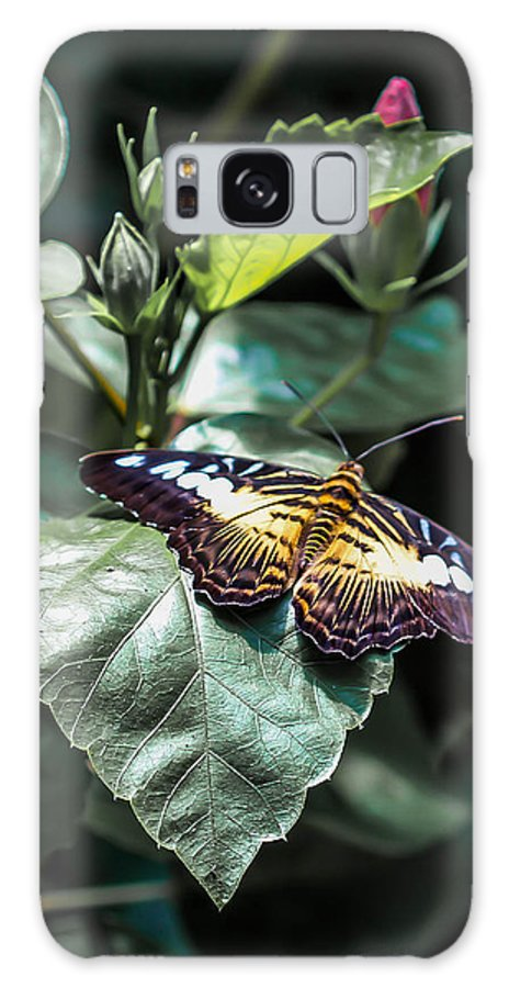 Clipper Butterfly Galaxy S8 Case featuring the photograph Clipper In Shadows by Marie Cardona