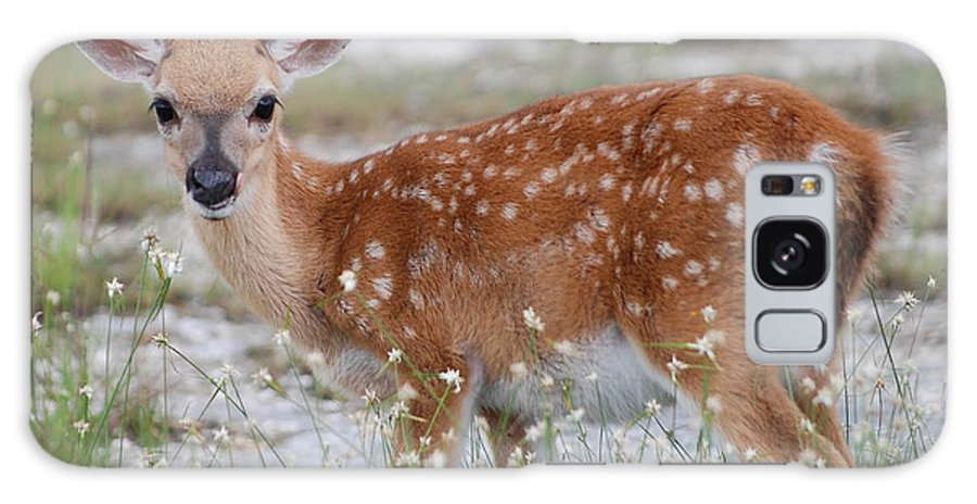 Key Deer Galaxy S8 Case featuring the photograph Close Up Key Deer by Mitchell Rudin