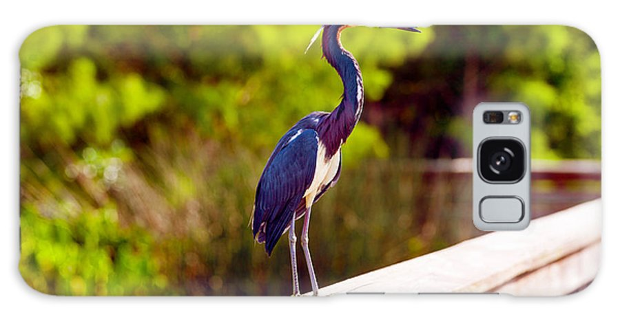 Photography Galaxy S8 Case featuring the photograph Close-up Of An Blue Egret, Boynton by Panoramic Images