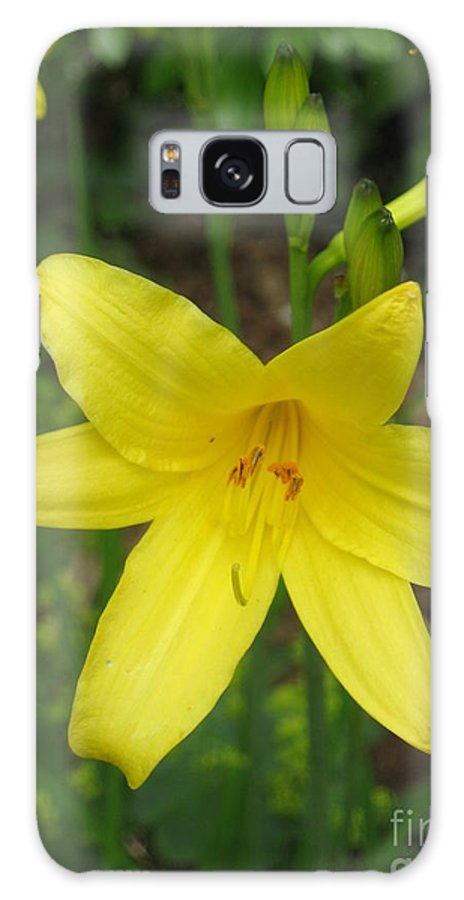 """""""pacific-northwest"""" Galaxy S8 Case featuring the photograph Close Up Of Yellow Mini Dayliliy by Ellen Miffitt"""